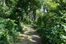 This image shows a trail a Orchard Glen Park.