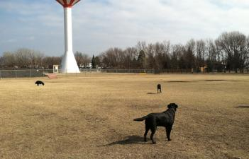 This image shows Yunker Farm Dog Park.